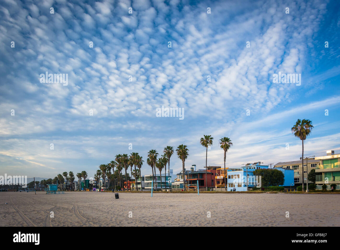 Palm trees and houses along the beach, in Venice Beach, Los Angeles, California. - Stock Image