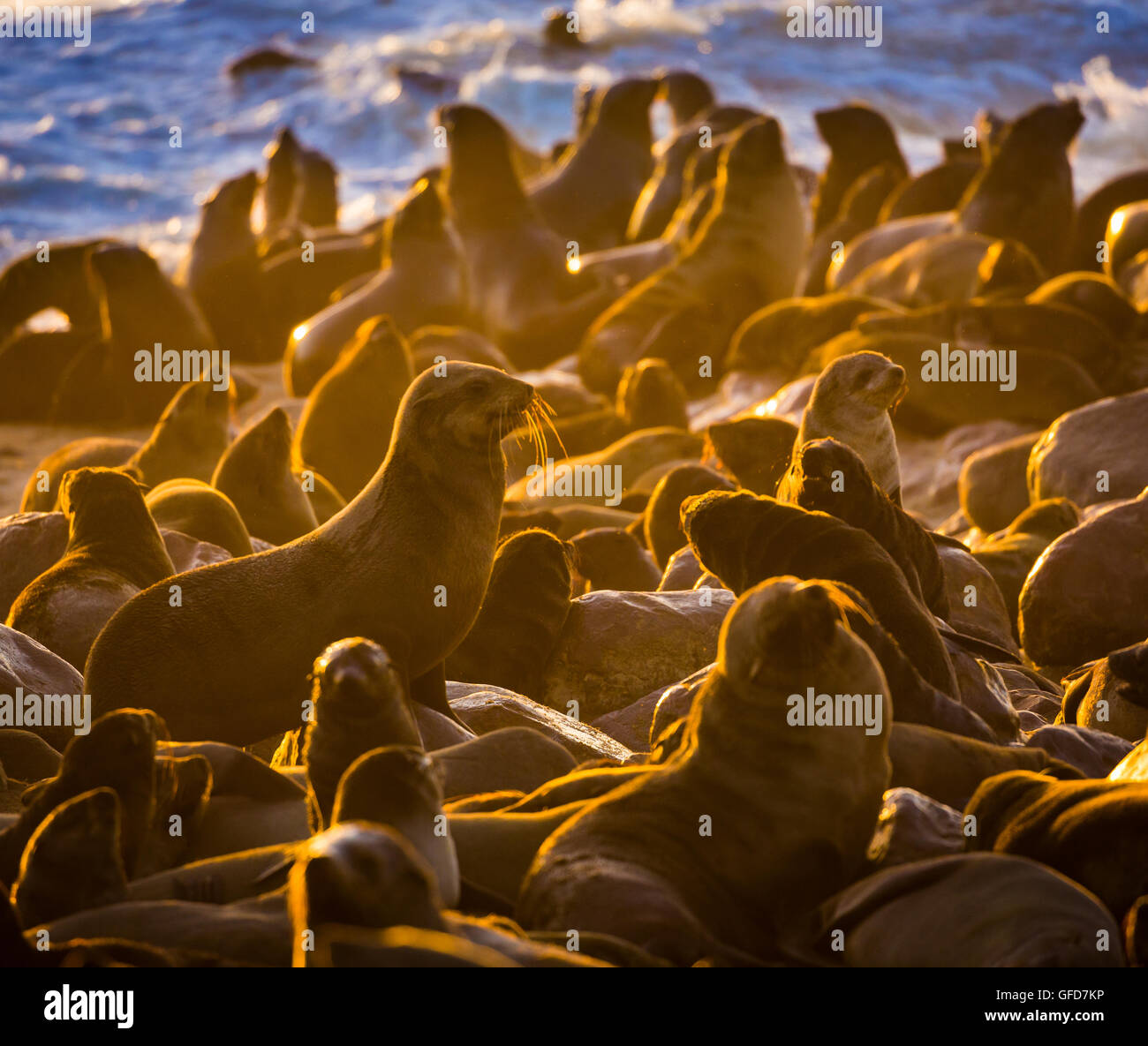 Fur seal colony near Cape Cross in Namibia, Africa - Stock Image