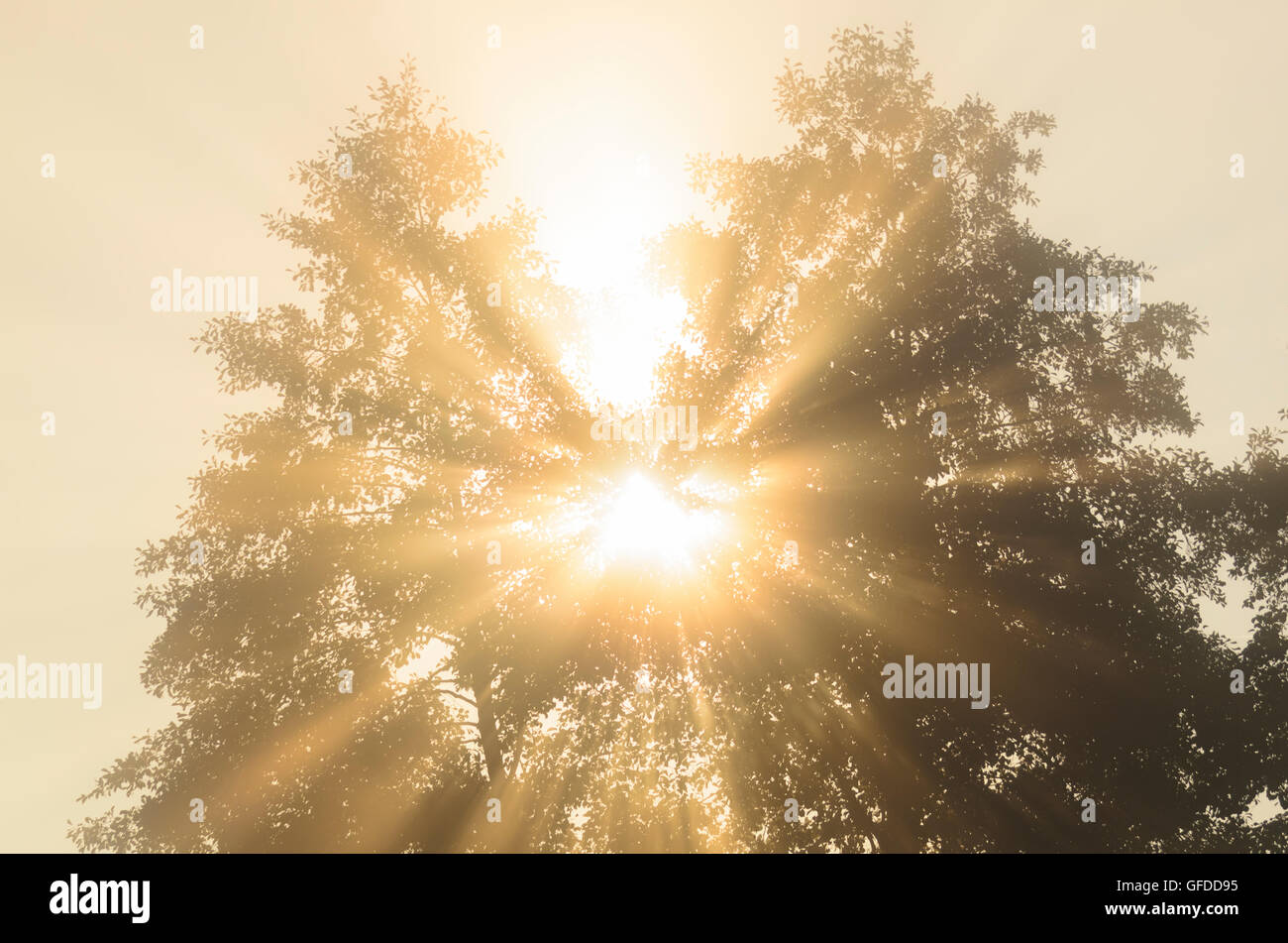 Kallmünz: Tree and Rising Sun, Germany, Bayern, Bavaria, Oberpfalz, Upper Palatinate - Stock Image