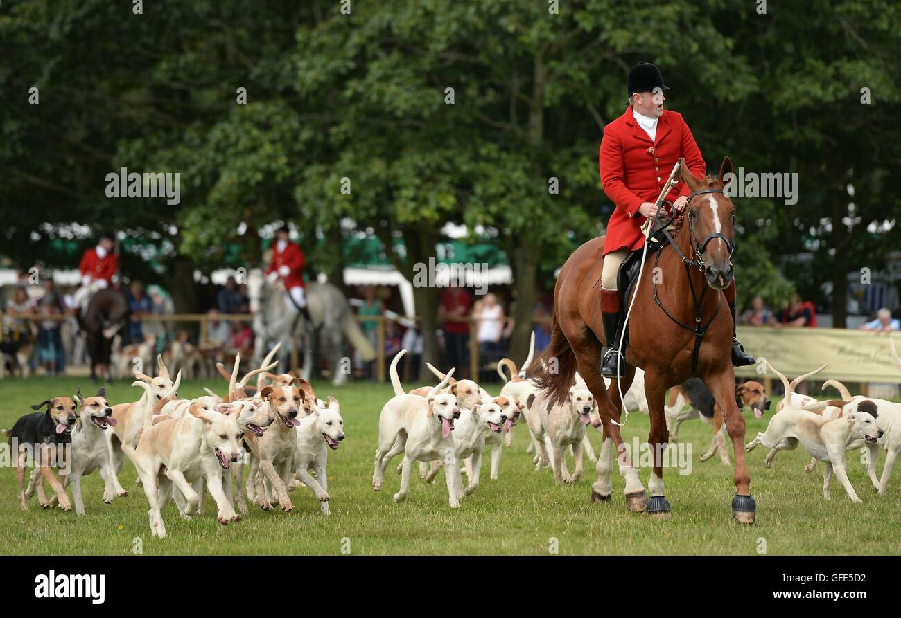 Hounds from the Warwickshire Hunt parade during The Game Fair 2016 at Ragley Hall in Alcester, Warwickshire. Stock Photo