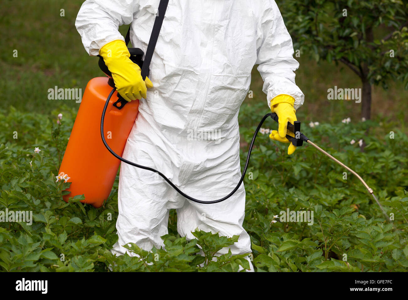 garden pesticides. Man Spraying Toxic Pesticides Or Insecticides In Vegetable Garden S