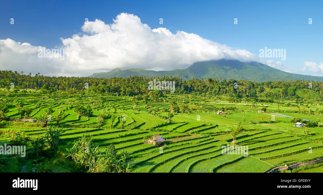 Rice Field Terrace landscape, Bali, Indonesia - Stock Image