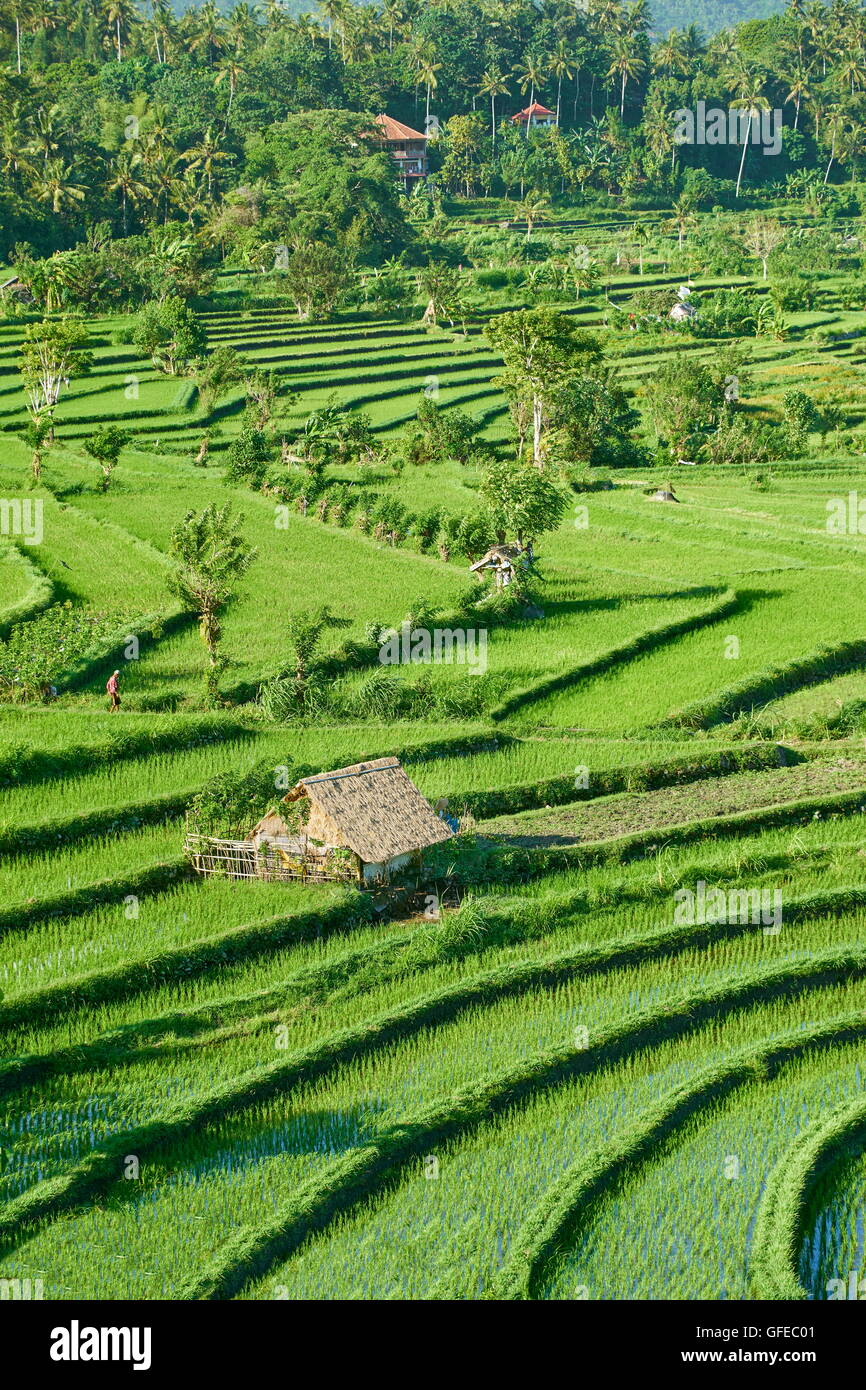 Rice Terrace landscape, Bali, Indonesia - Stock Image