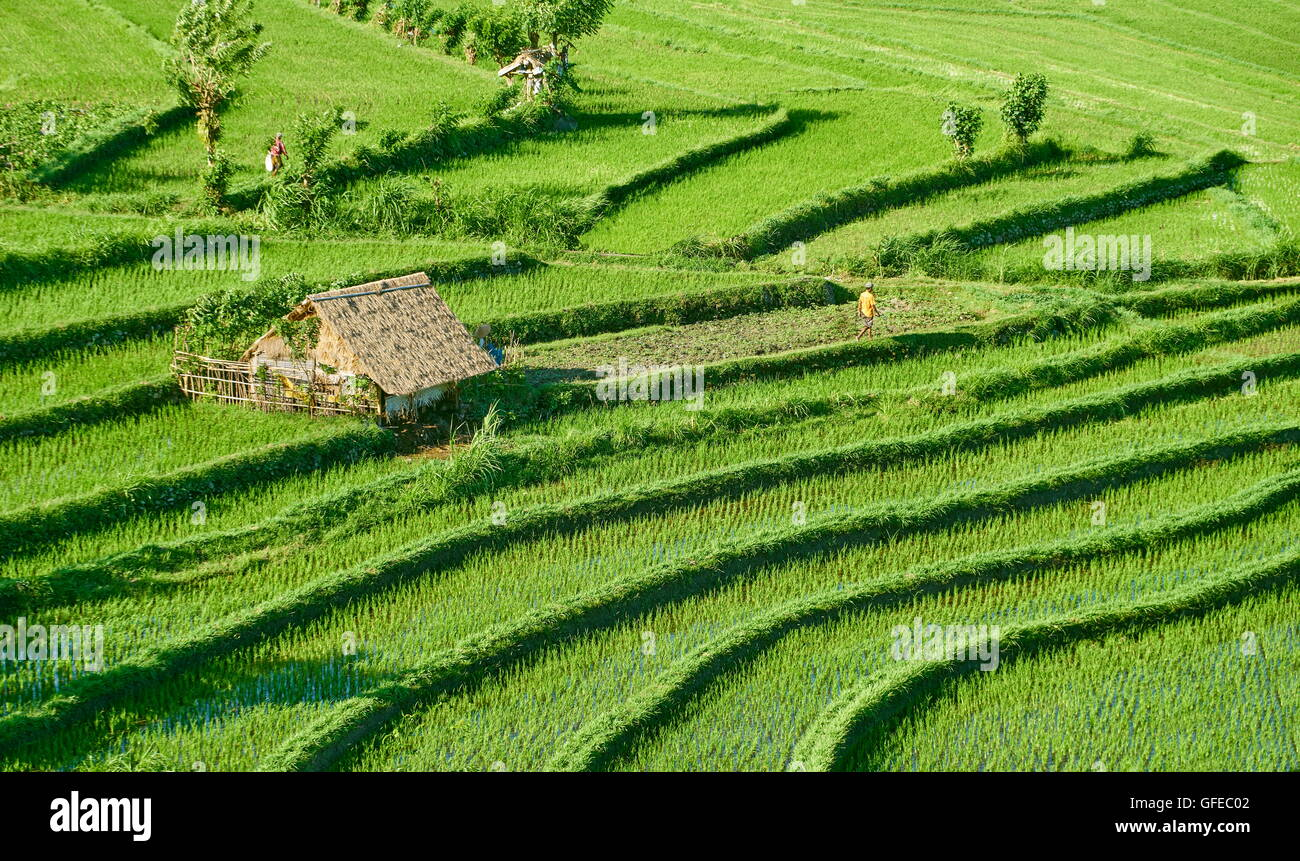 Bali, Indonesia - Rice Terrace Field landscape - Stock Image