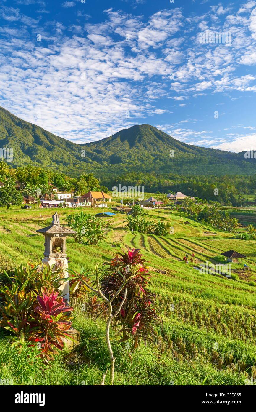 Jatiluwih Rice Terrace, Bali , Indonesia - Stock Image