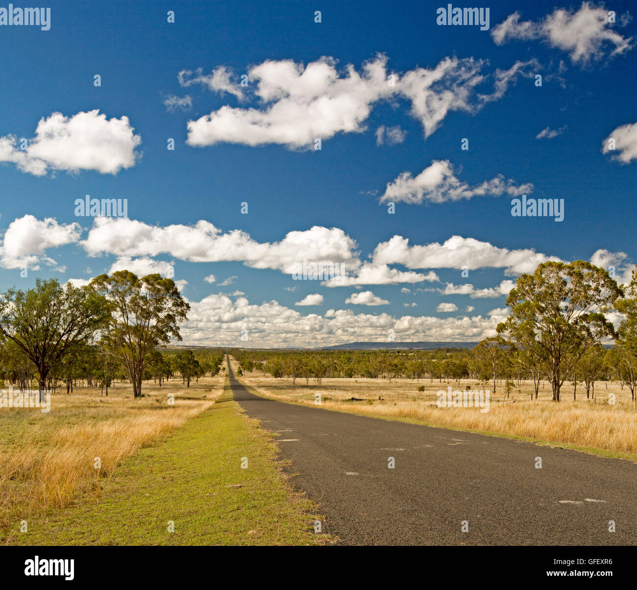 Long straight road leading through golden grasslands & eucalypt woodlands of outback Australia to distant horizon - Stock Image