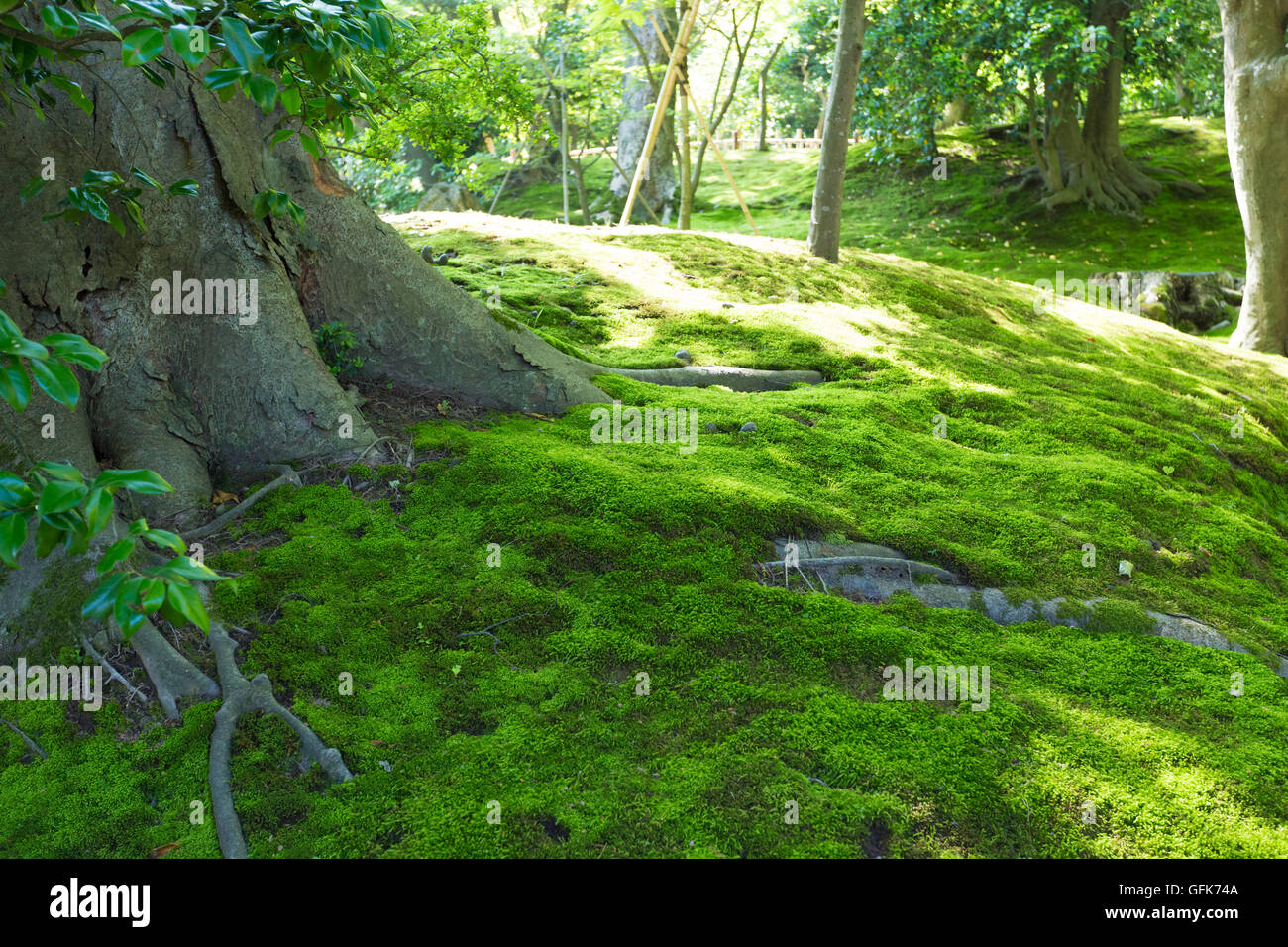 Clumps of moss on the ground - Stock Image