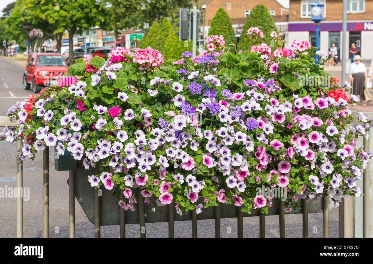 Flower box in Summer in a small village in West Sussex, England, UK. - Stock Image