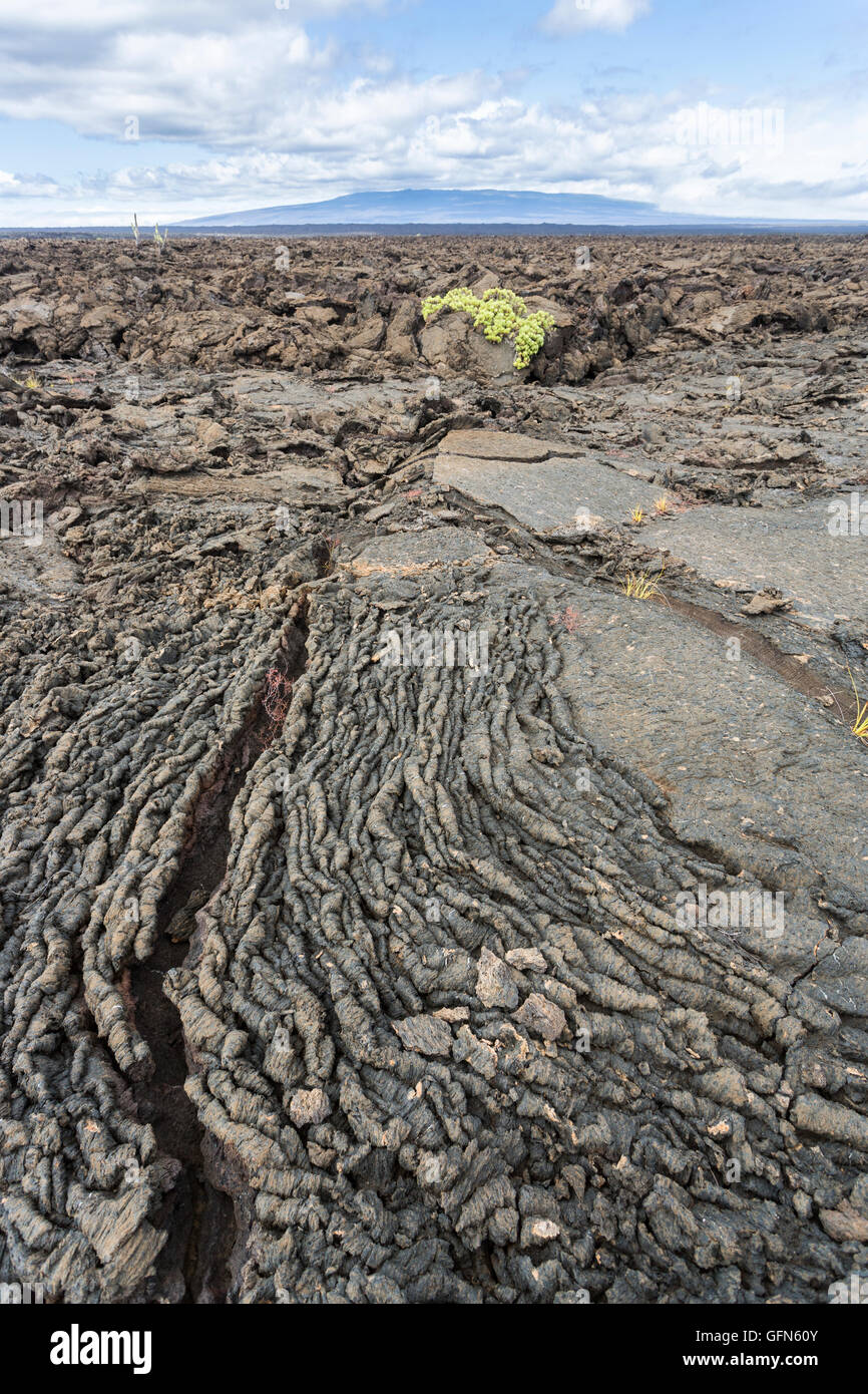 Pahoehoe (or ropy or smooth) lava, Moreno Point, Isabela Island, Galapagos Islands, Ecuador, South America - Stock Image