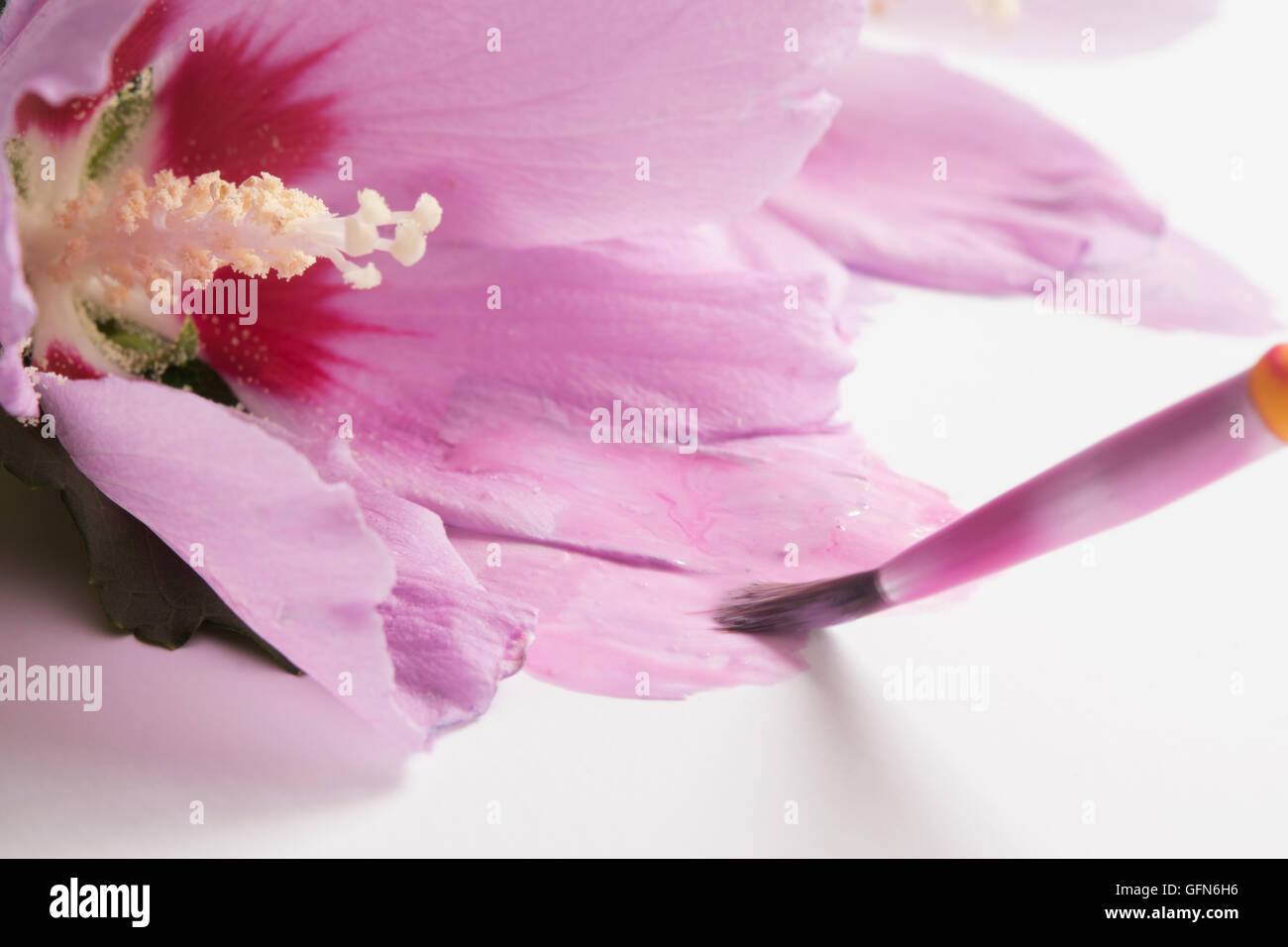 painting pink flowers - Stock Image