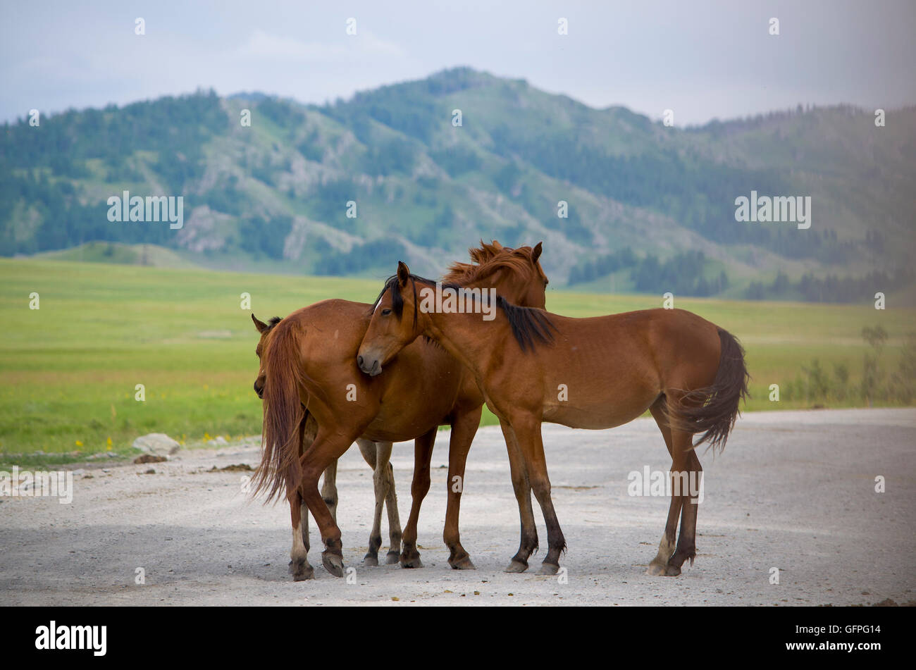 pets of a horse stand against mountains,a family, a foal, a horse, a landscape, a mare, against, animal, house, - Stock Image