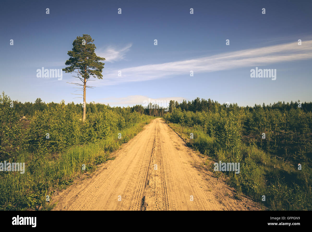 Empty Forest Road in northern Sweden - Stock Image