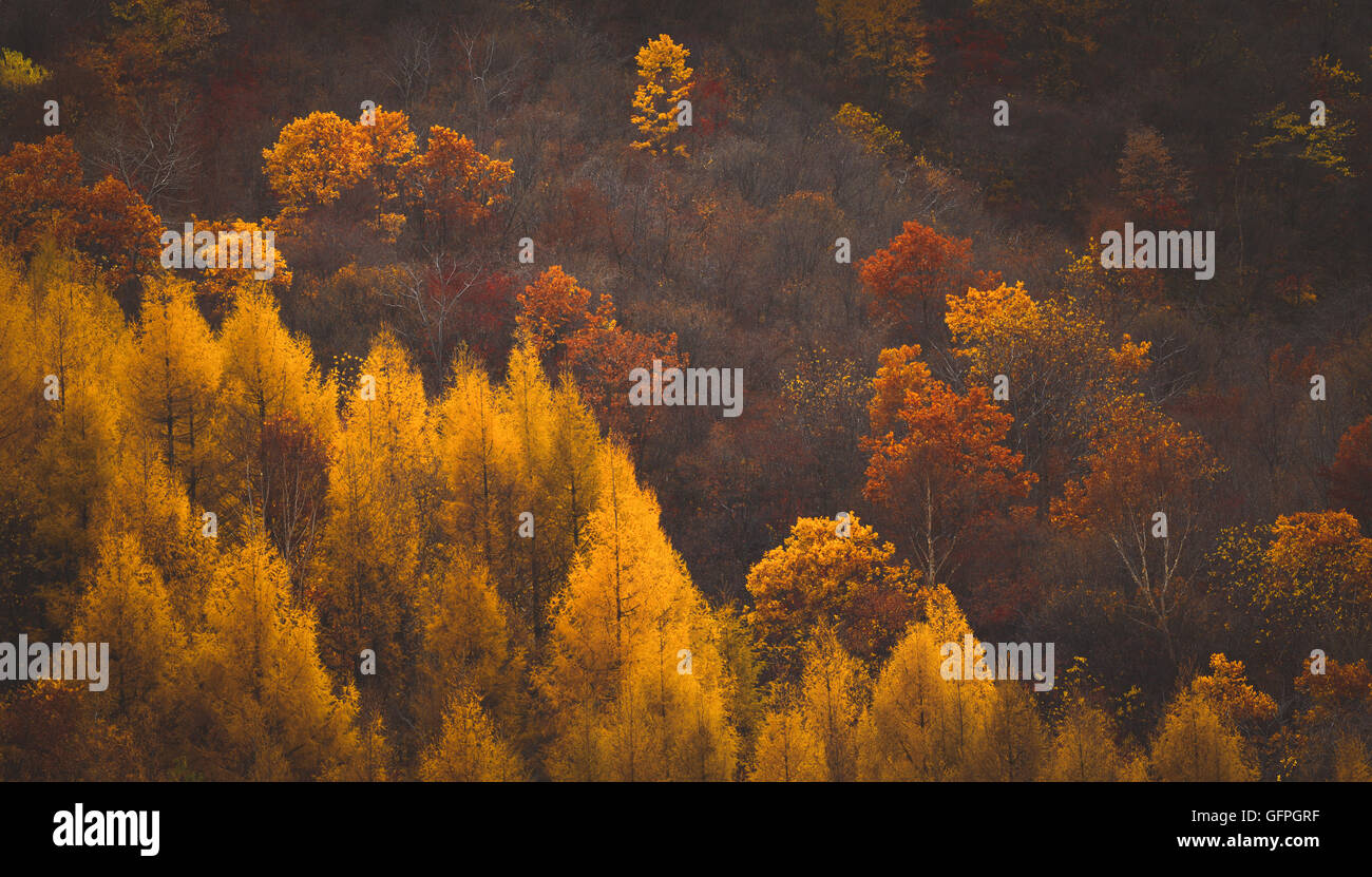 The changing of the leaves on mountain - Stock Image