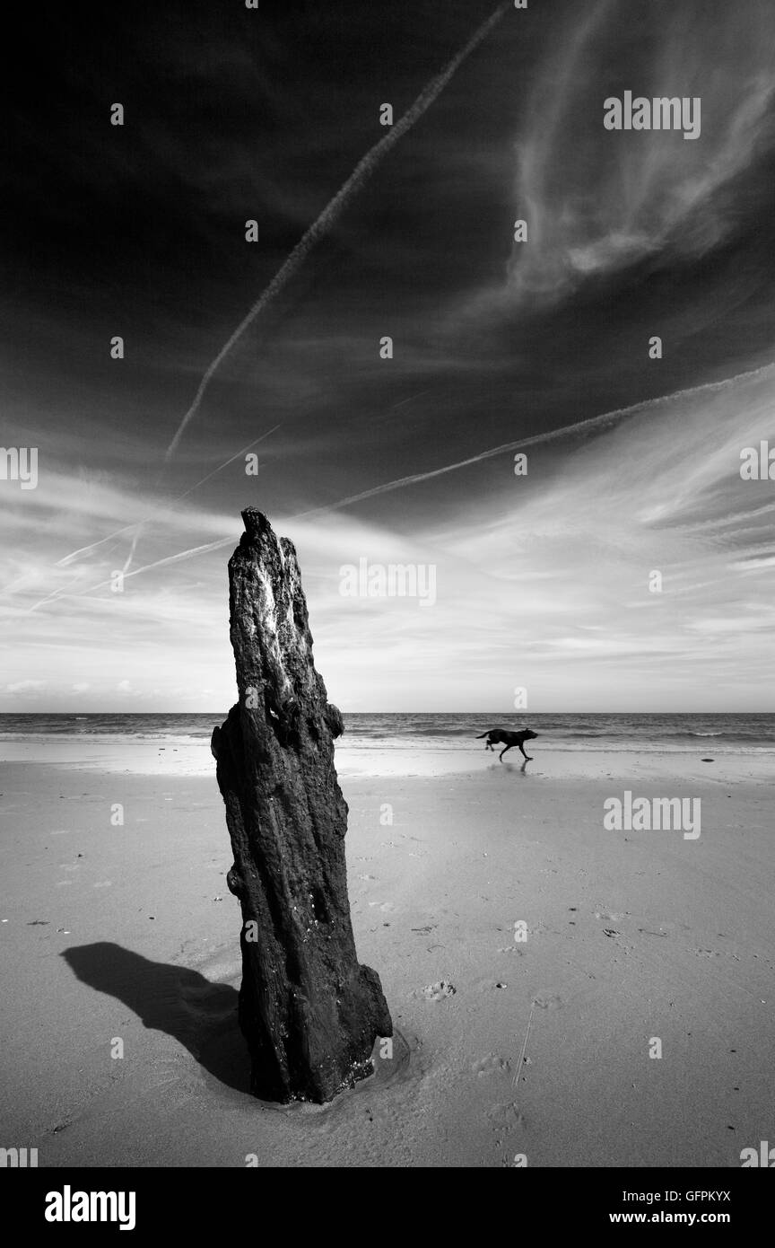 Old wooden post and a dog running on Brancaster beach, Norfolk, UK. - Stock Image