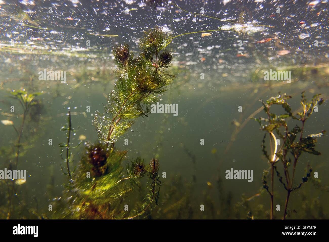 Freshwater Underwater Scene Freshwater Fish Rivers And