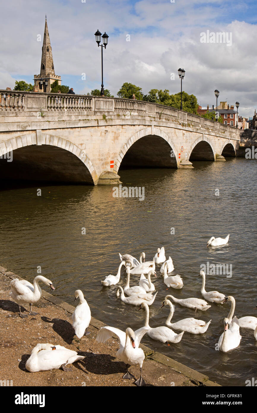 UK, England, Bedfordshire, Bedford, swans at 1813 Town Bridge across River Great Ouse Stock Photo