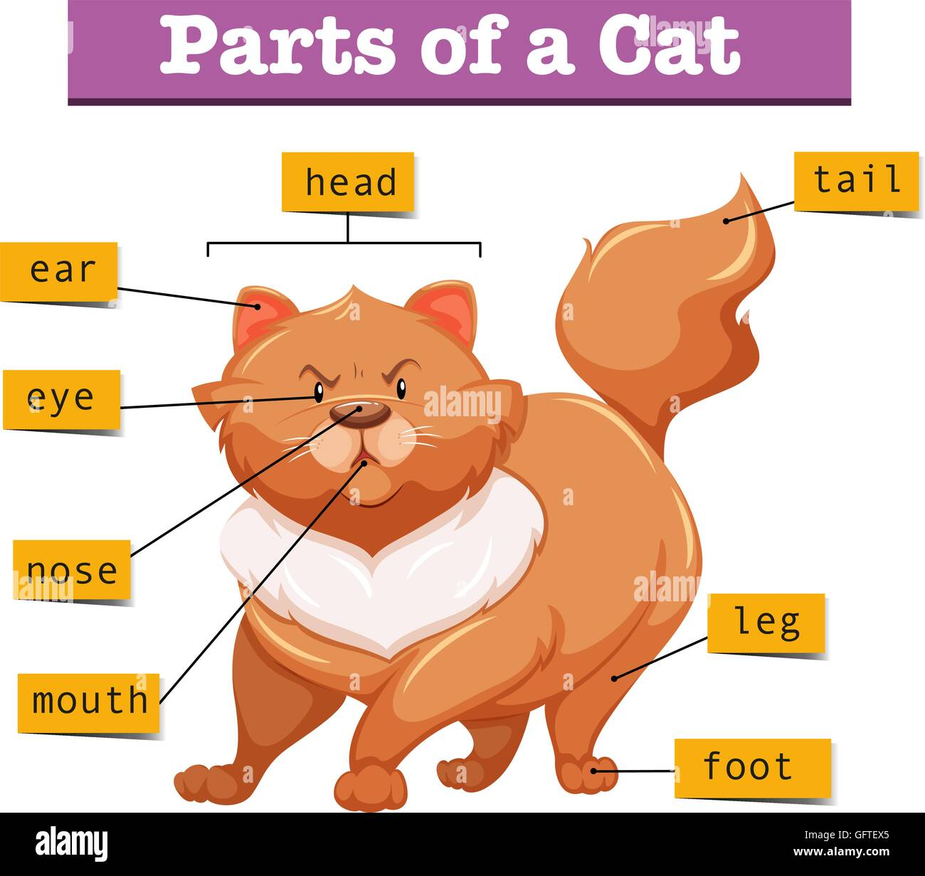 Parts Of A Cats Ear Diagram - Electrical Work Wiring Diagram •
