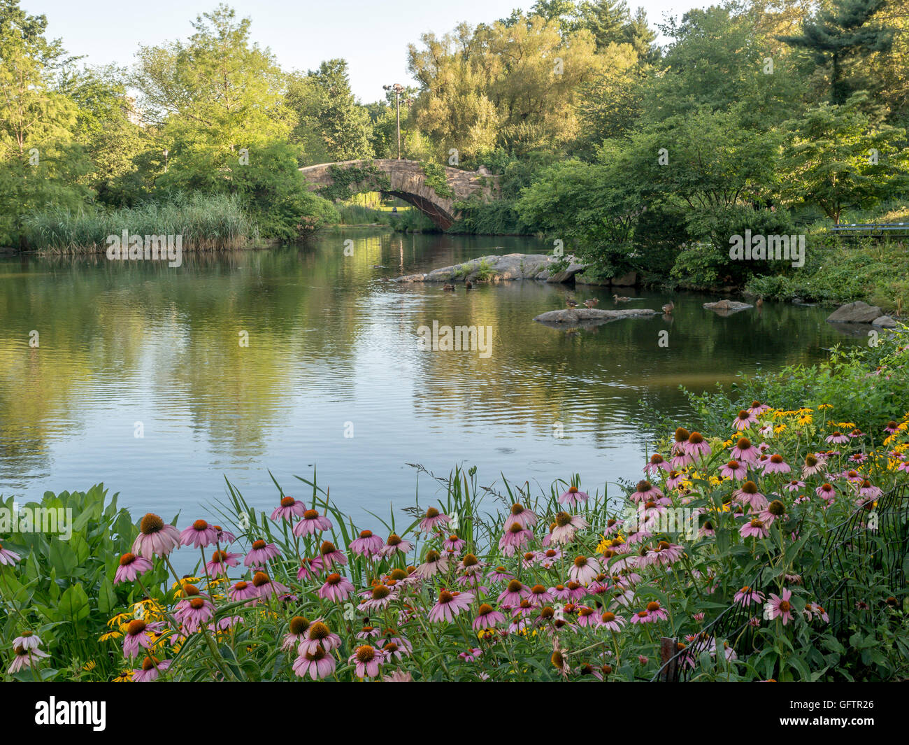 Gapstow bridge in Central Park on pond with flowers in summer in early morning - Stock Image