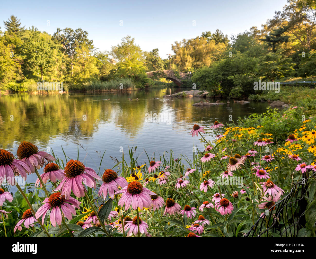 Gapstow bridge in Central Park on pond with flowers in summer in early morning Stock Photo
