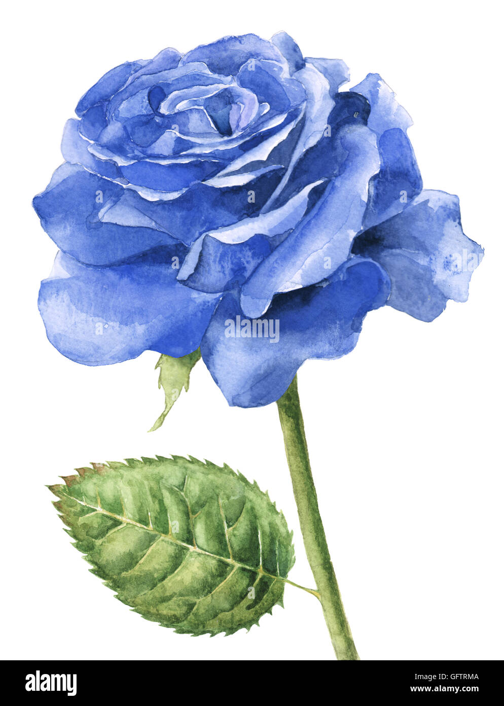 Hand Painted Watercolor Single Blue Rose In Full Bloom