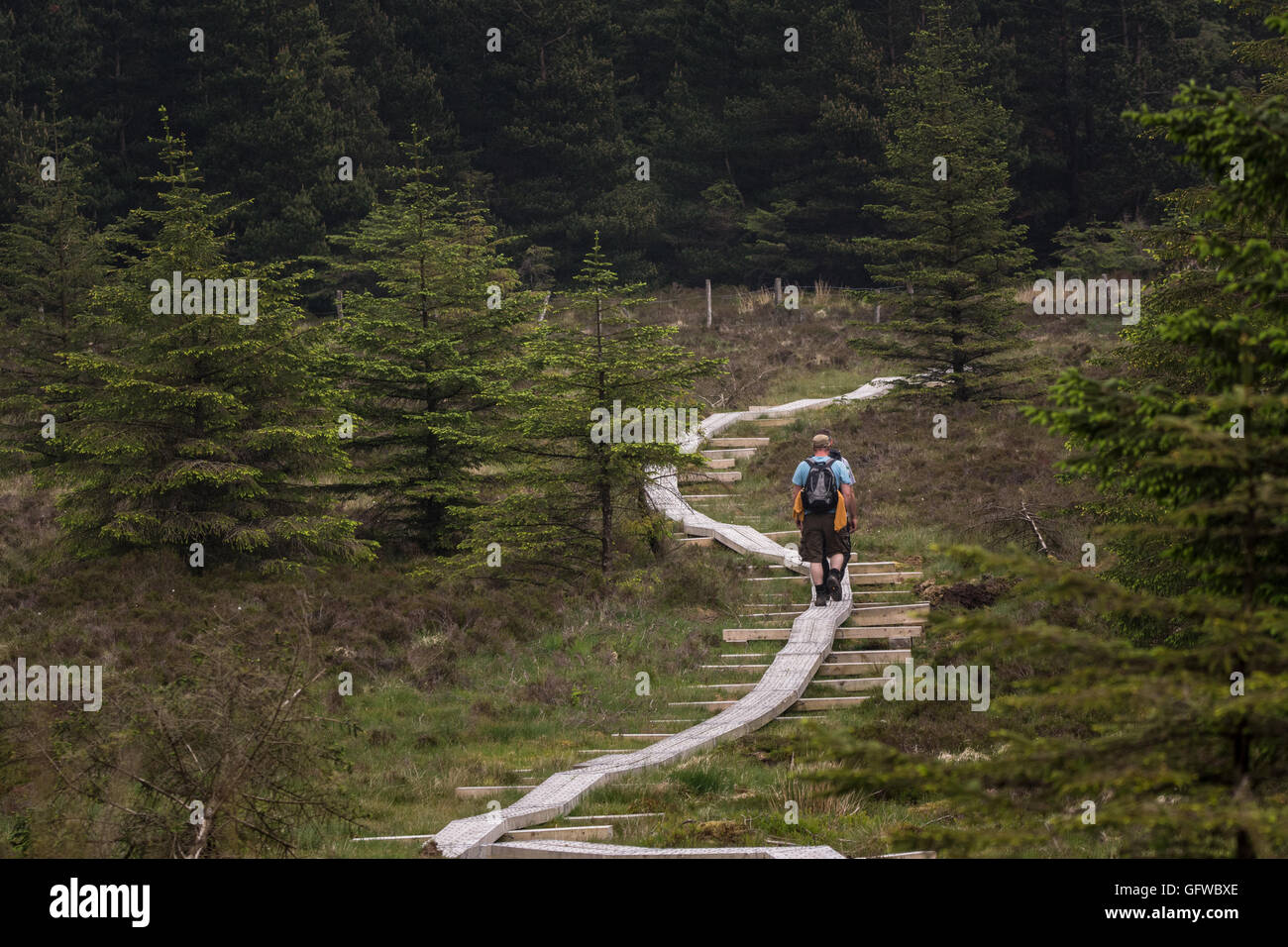 Hikers on upland boardwalks on the Wickow Way in county Wicklow Ireland - Stock Image