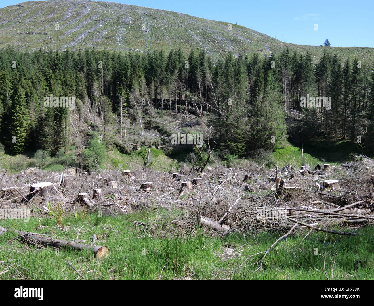 Timber Harvesting, Gamescleuch Hill, Ettrick Valley, Borders, Scotland, UK - Stock Image