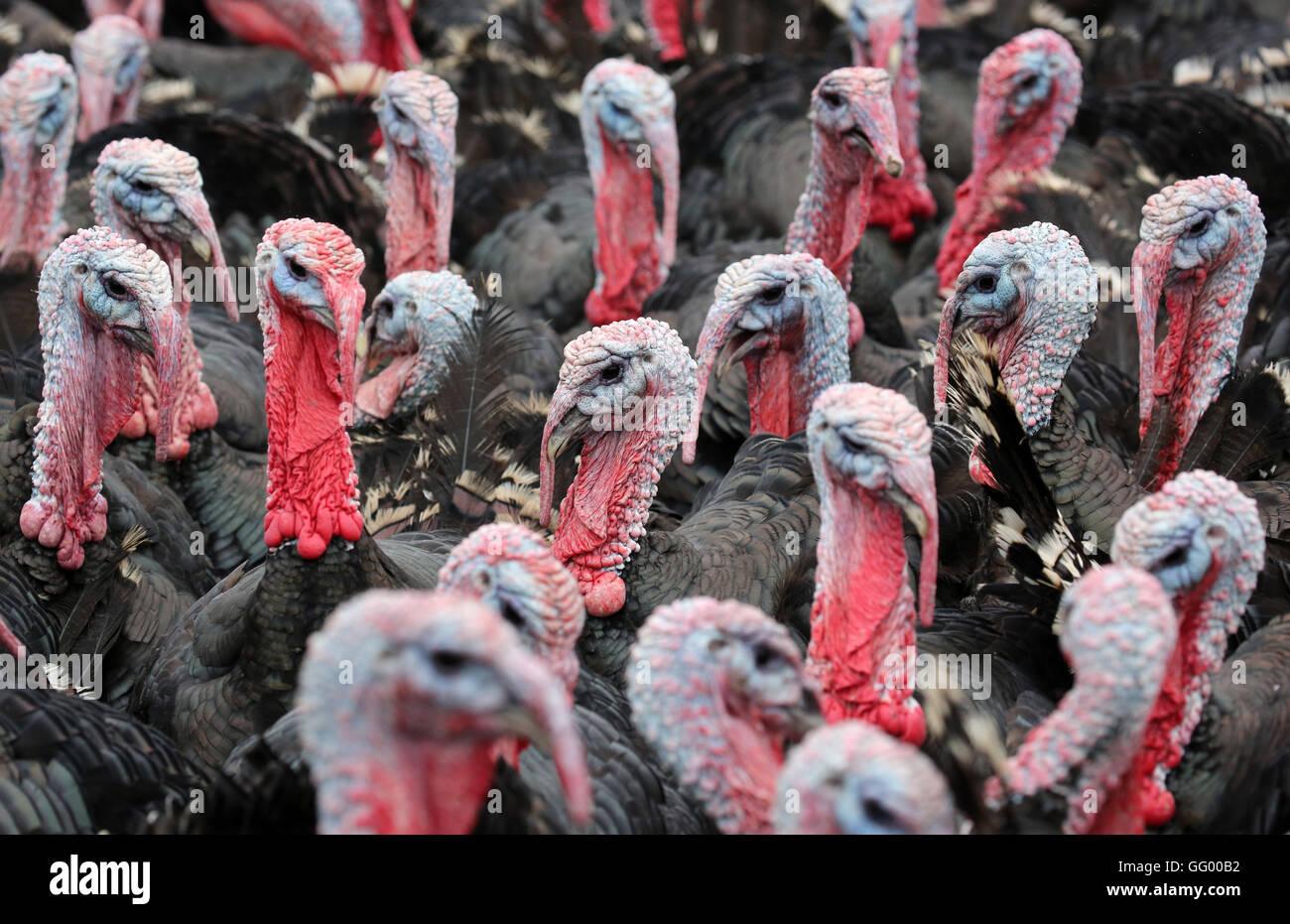 turkeys offensive agai germany - HD1408×791