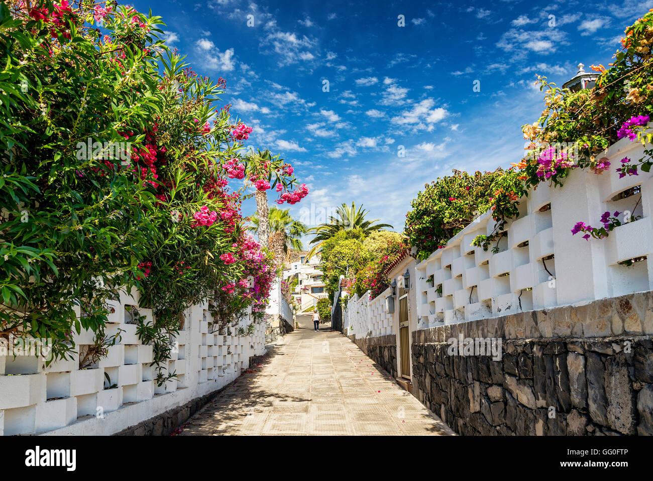 flowered alley street in los gigantes residential area tenerife spain - Stock Image