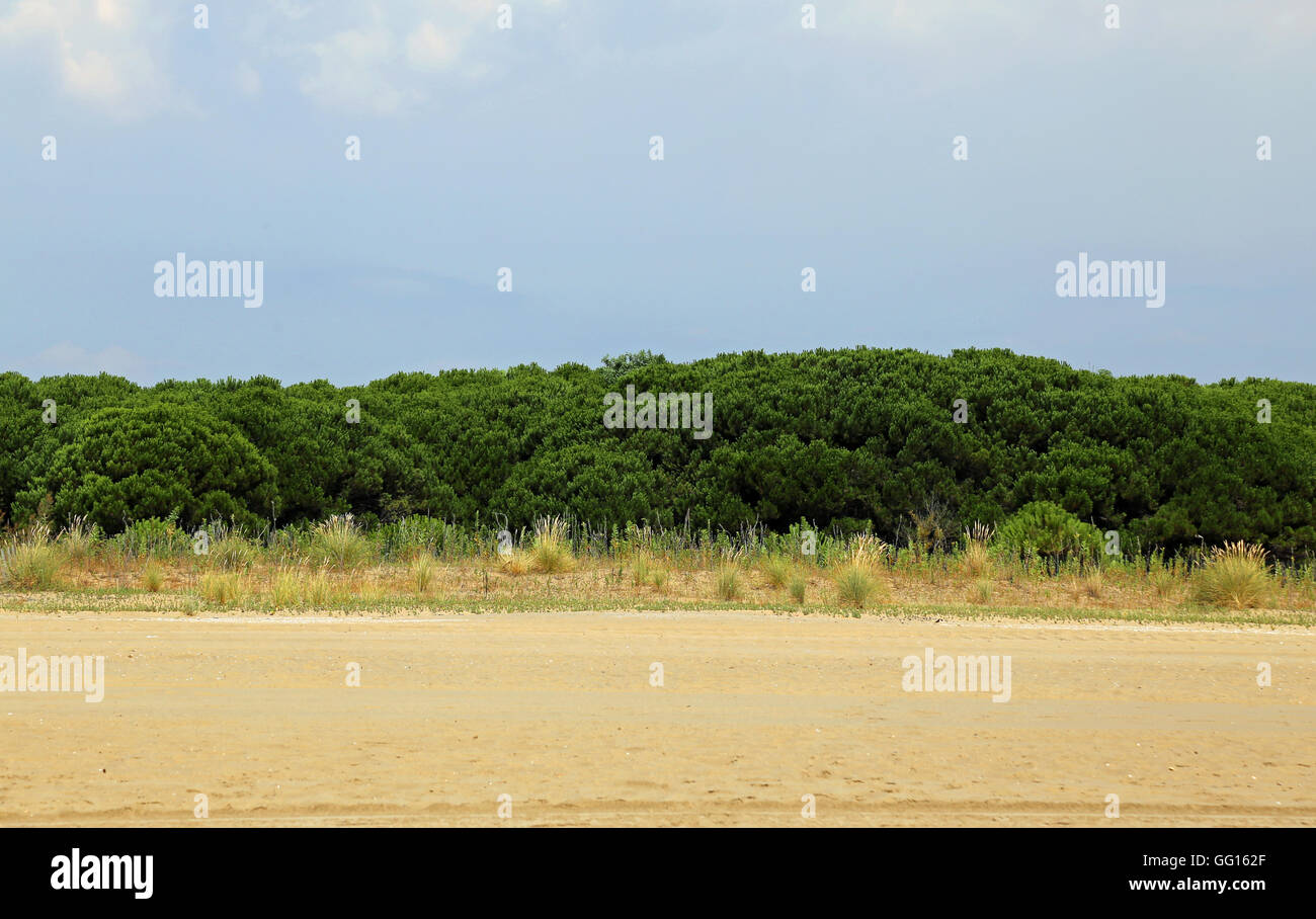 italian maquis shrubland with shrub and sand in summer - Stock Image