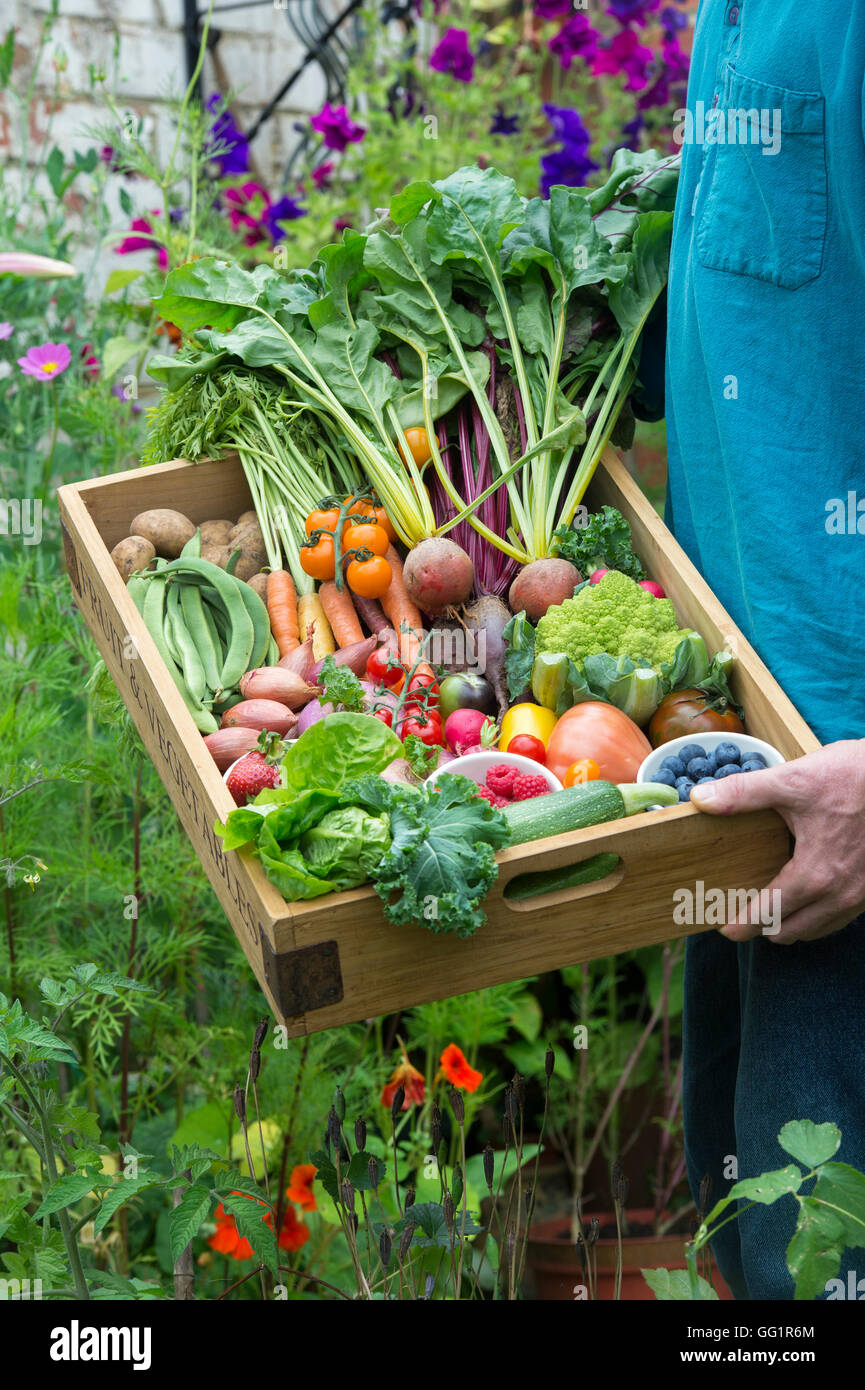Man holding a Wooden tray of harvested fruit and vegetables in an English cottage garden - Stock Image