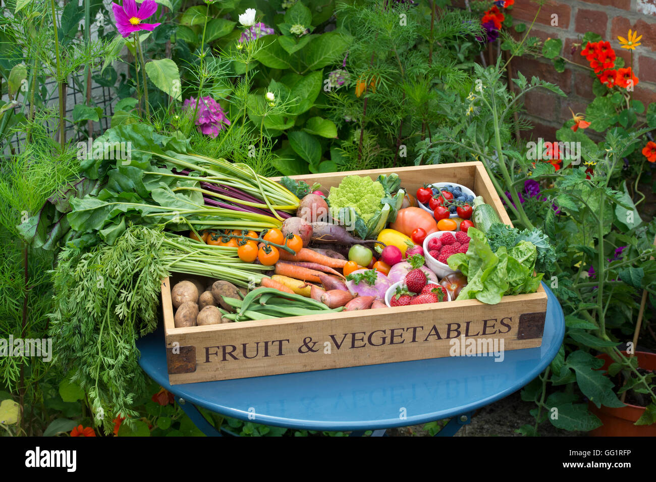 Wooden tray of harvested fruit and vegetables in an English cottage garden - Stock Image