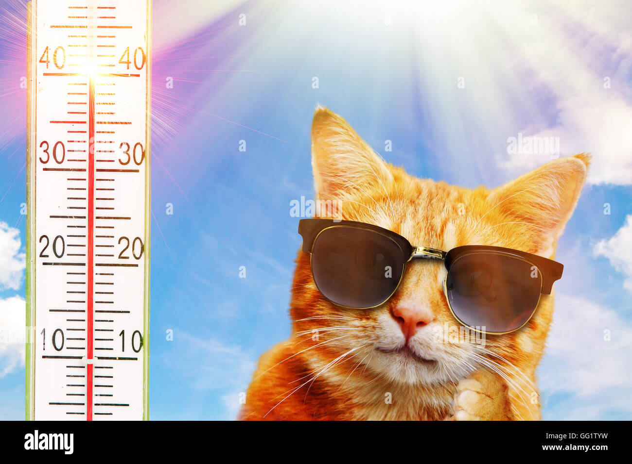 Cat on a very hot day - Stock Image