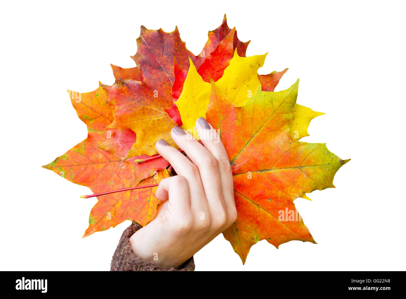 Colorful autumn leaves in the hand - Stock Image