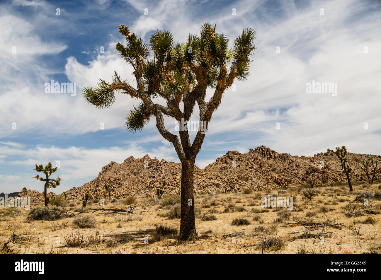 Joshua Tree National Park, California, USA Stock Photo