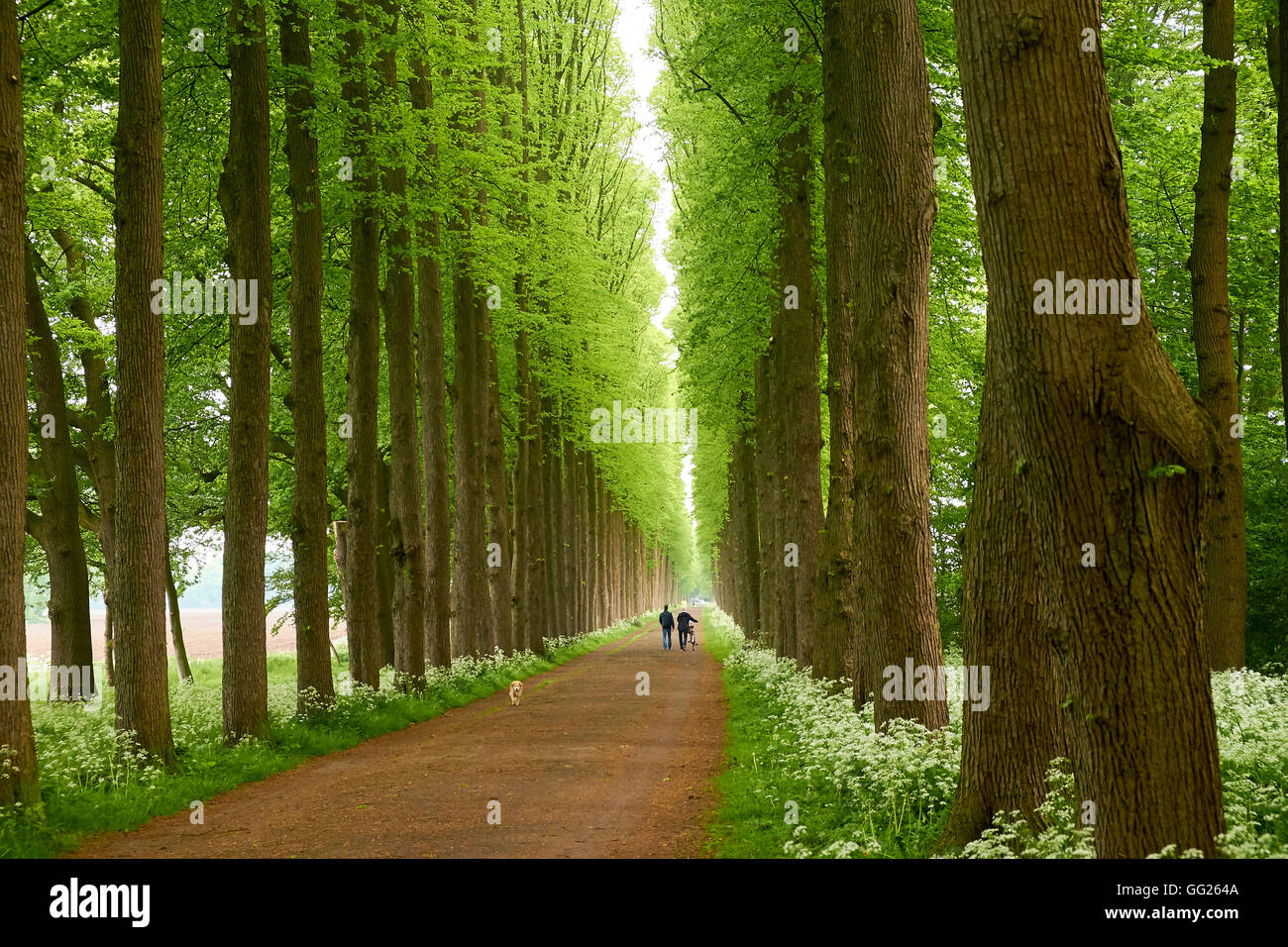 Allee of Evenburg in Leer, East Frisia, Germany - Stock Image
