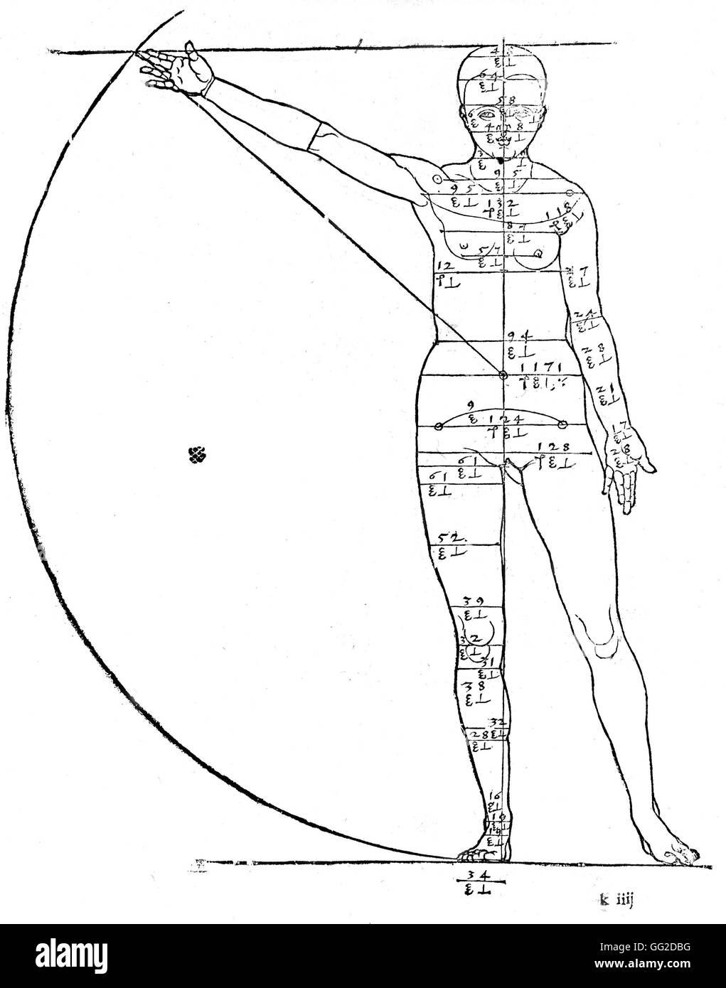 Woman Anatomy Sketch Stock Photos & Woman Anatomy Sketch Stock ...