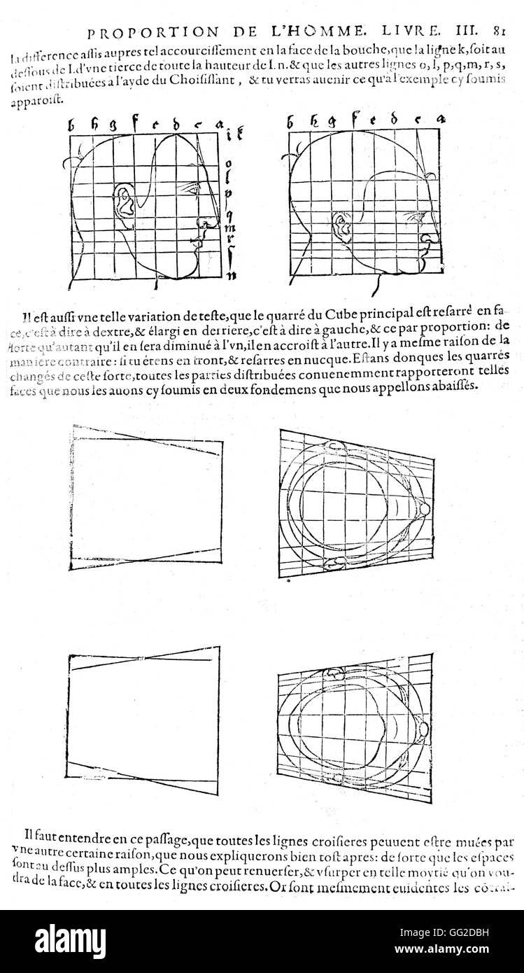 albrecht head human body proportions scheme sketch skull stock