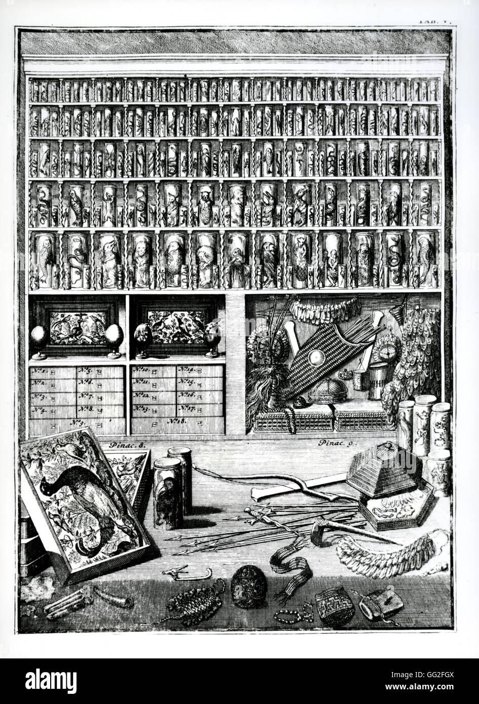 Cabinet of curiosities. Illustration from 'Théâtre des Merveilles de la Nature' written by Vincent - Stock Image