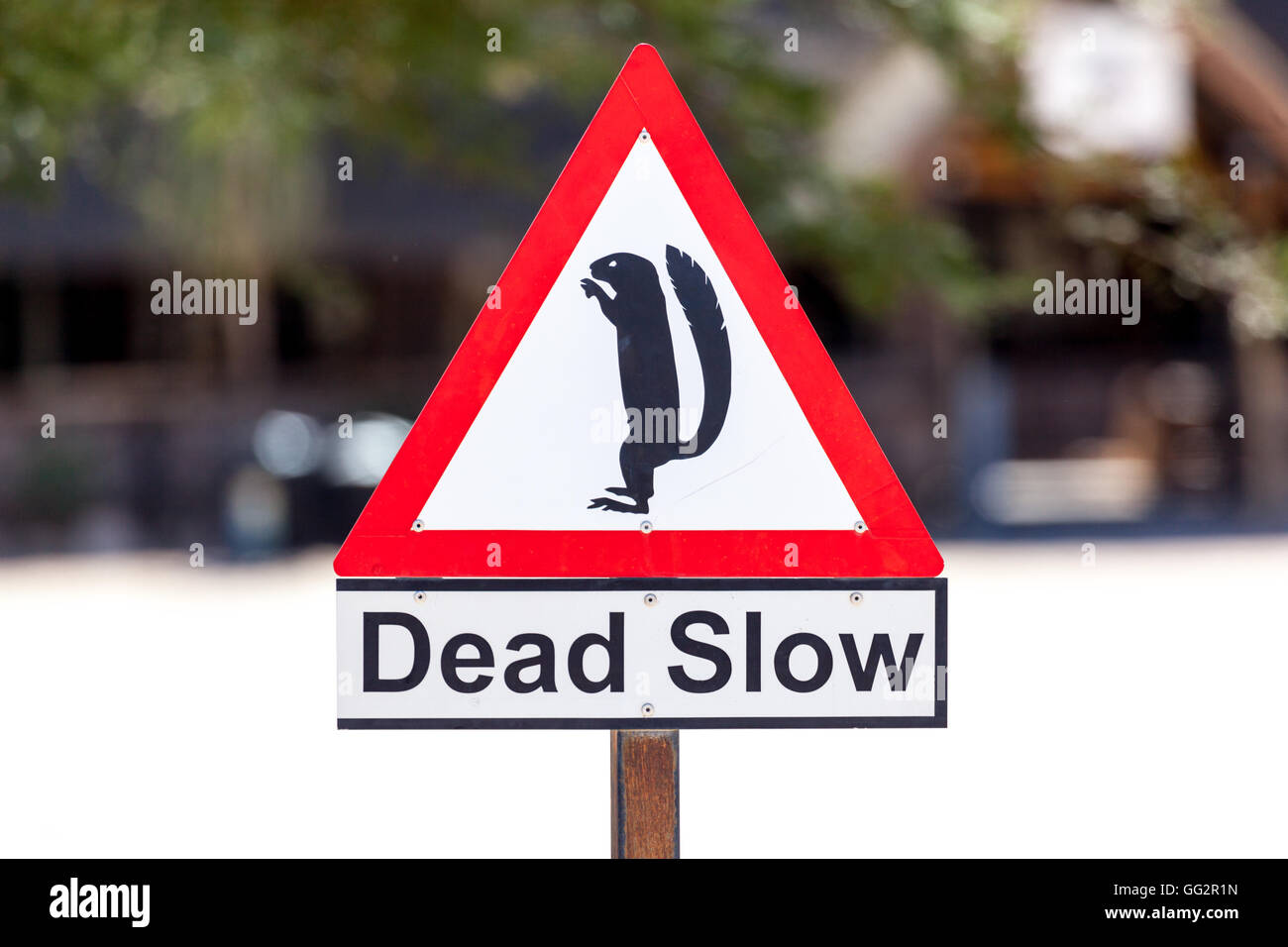 Namibia Dead Slow sign, Caution Squirrels, Solitaire - Stock Image