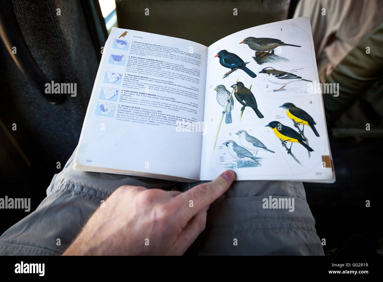 Namibia Wildlife book of local birds in Africa - Stock Image
