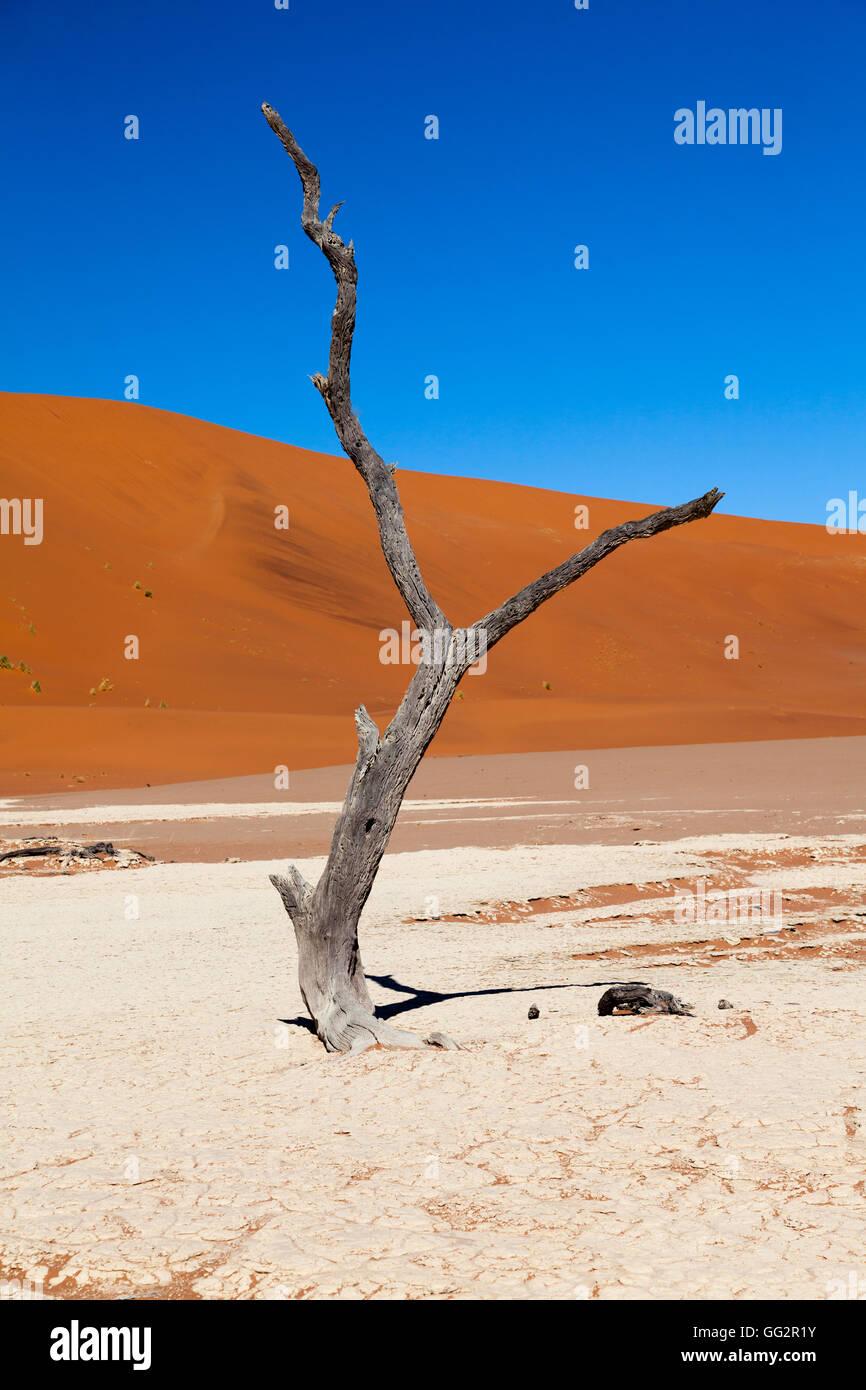 Sossusvlei Namibia Dead tree. - Stock Image