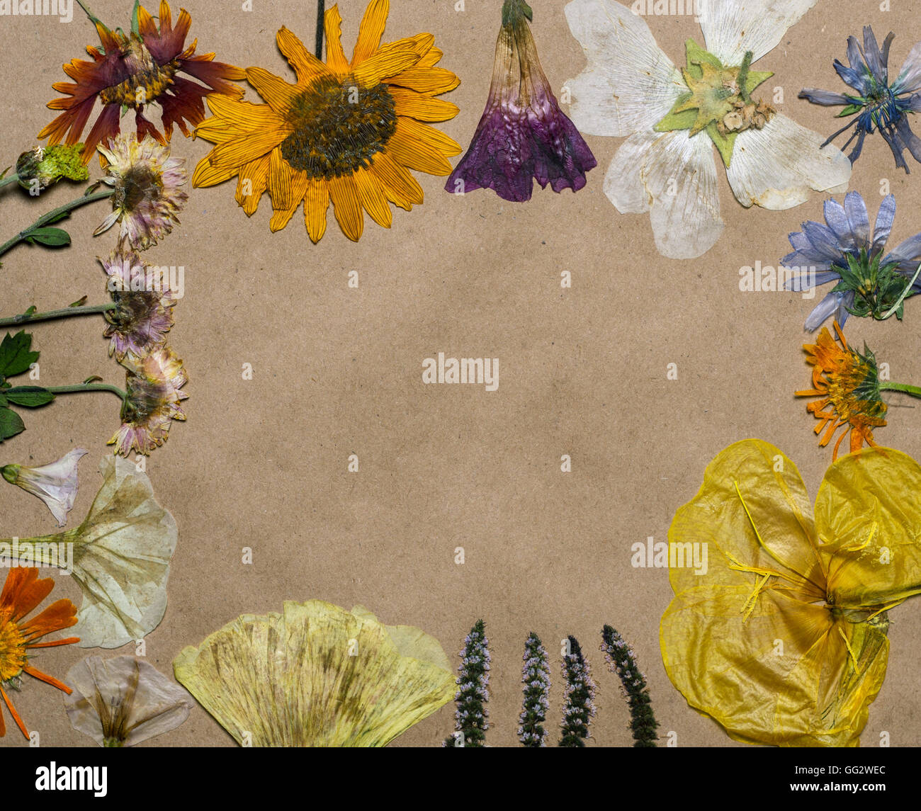 Pressed Wild Flowers Composed In A Frame On Craft Paper Stock Photo
