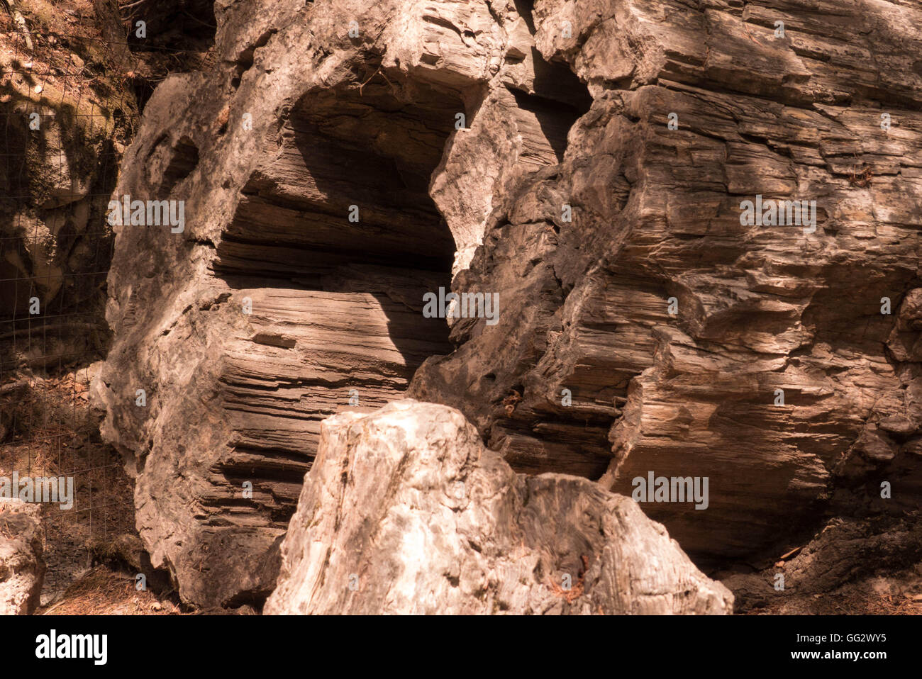 petrified wood trees in Petrified forest Northern California - Stock Image