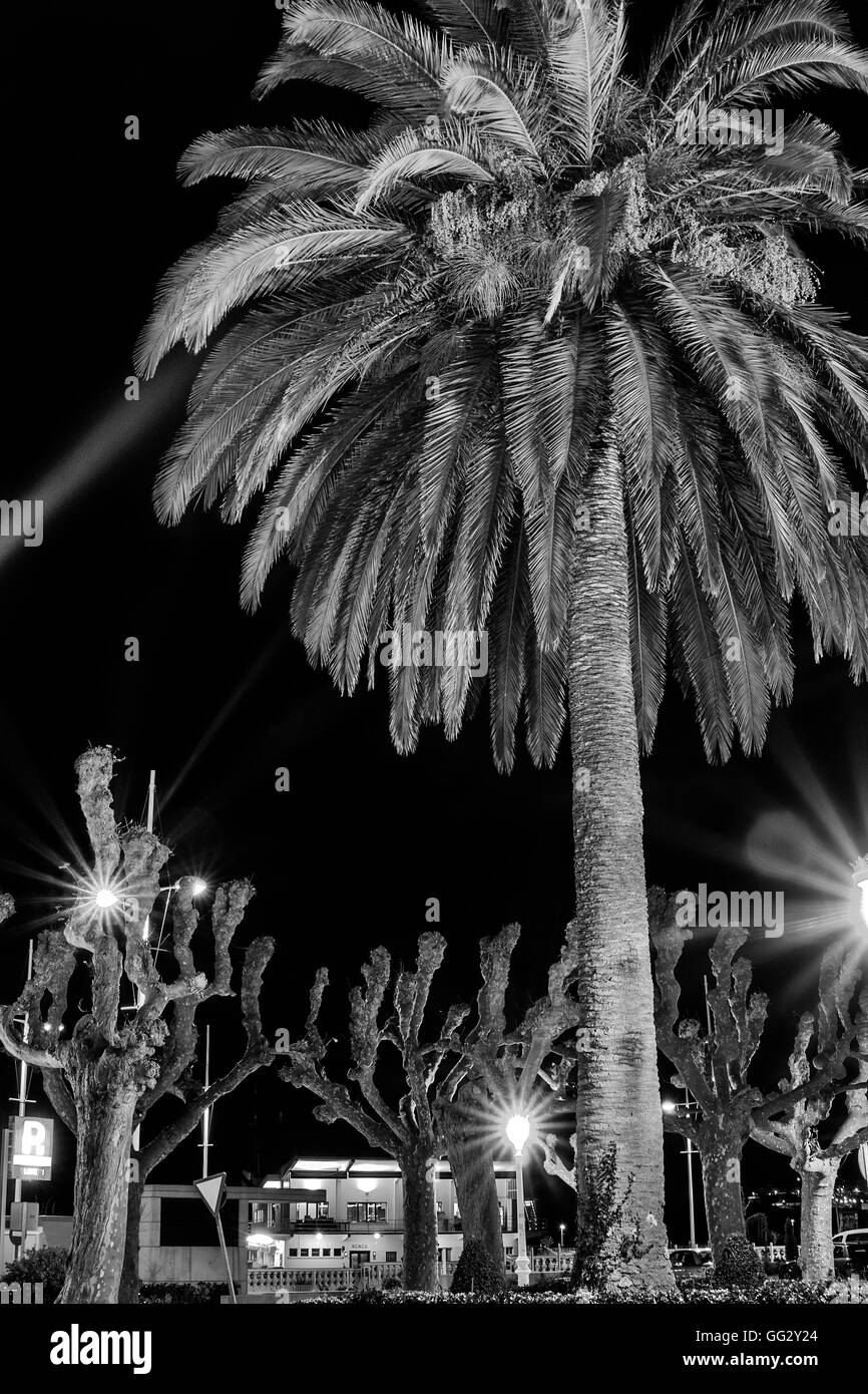 Palm tree in the park of Castro Urdiales, village of Cantabria, Spain, Europe - Stock Image