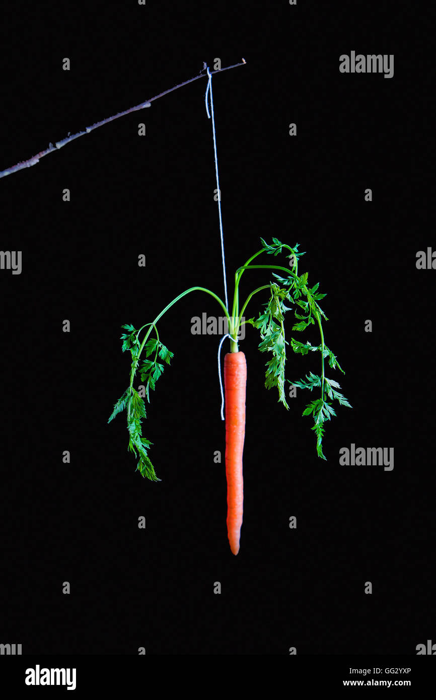 Carrot on a Stick. Fine Art image. - Stock Image