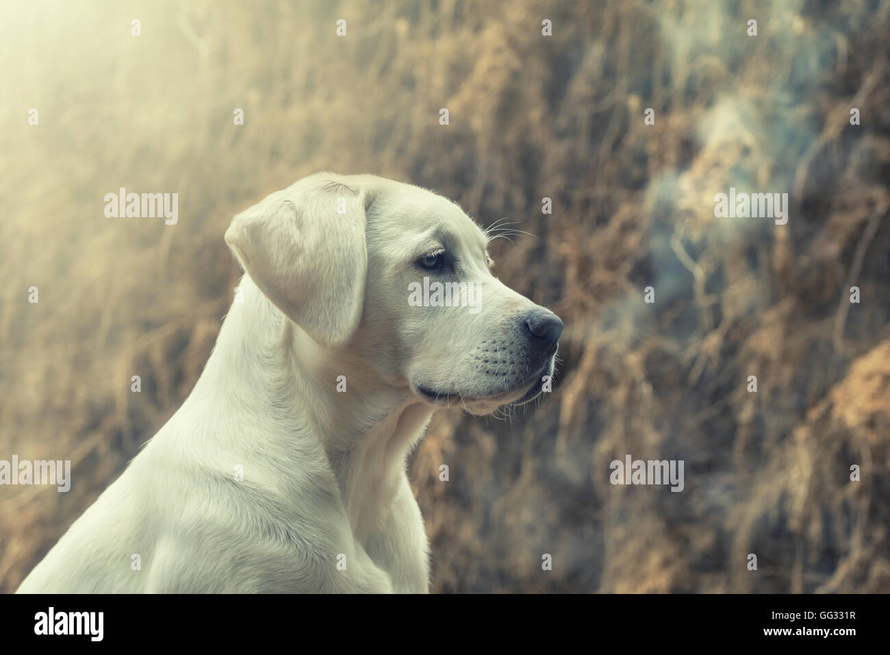 Puppy Breath Stock Photos Puppy Breath Stock Images Alamy