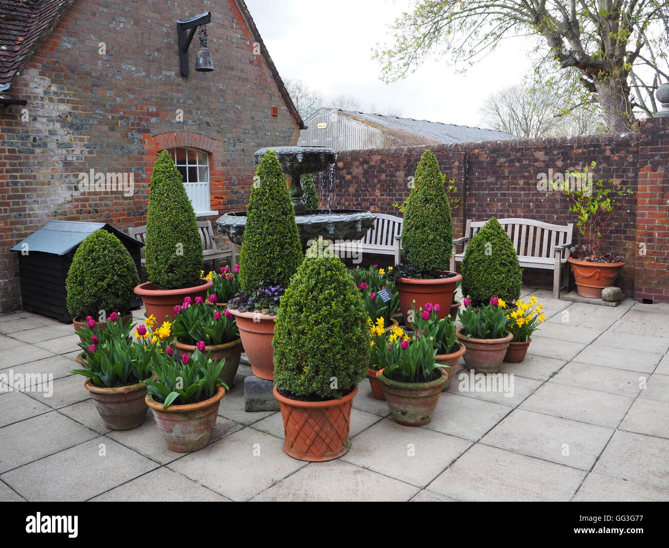 Chenies Manor courtyard with water feature and planted tubs. Seasonal spring bulbs and conifers in terracotta pots. - Stock Image