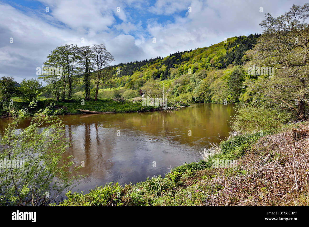 River Wye; Near Monmouth; Wales; UK - Stock Image