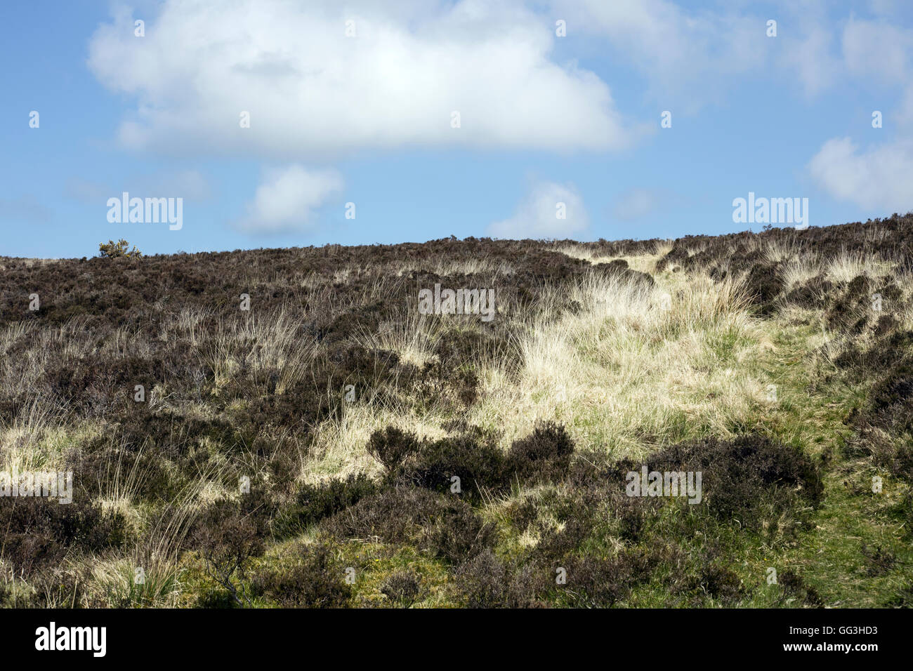 Dried grasses on Exmoor Devon England - Stock Image