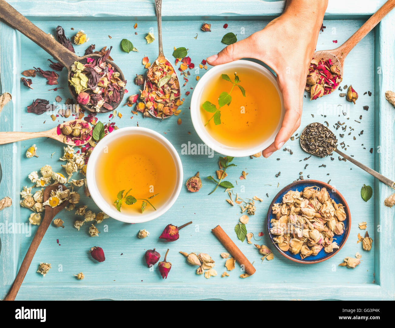 Two cups of healthy herbal tea with mint, cinnamon, dried rose and camomile flowers in different spoons, woman's Stock Photo